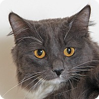 Adopt A Pet :: Precious - Walnut Creek, CA