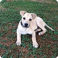 Adopt A Pet :: Holly - Homewood, AL