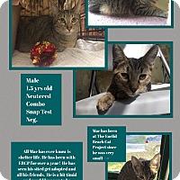 Adopt A Pet :: Mac - CLEVELAND, OH