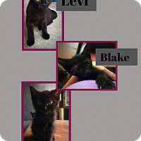 Adopt A Pet :: Levi - CLEVELAND, OH