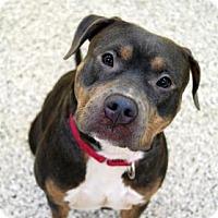 Adopt A Pet :: DJ - Bradenton, FL