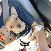 Adopt A Pet :: Oswald - Whitestone, NY