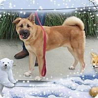 Adopt A Pet :: julius - Gadsden, AL