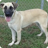 Adopt A Pet :: Remmy - Olive Branch, MS