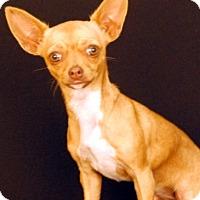 Adopt A Pet :: Lexi - Newland, NC