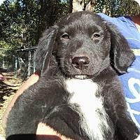 Adopt A Pet :: Zander - Ellaville, GA