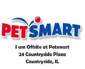 Hamster for adoption in Chicago Ridge, Illinois - MATHEW