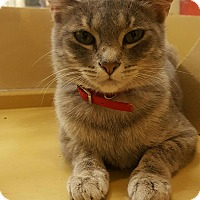 Adopt A Pet :: Mitzy (in CT) - Manchester, CT