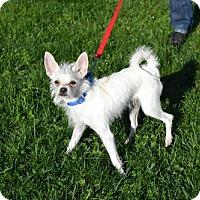 Adopt A Pet :: Dobbie - Akron, OH