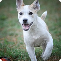 Adopt A Pet :: Inga - Gorham, ME