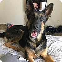 Adopt A Pet :: Argo Adoption Pending - Lancaster, PA