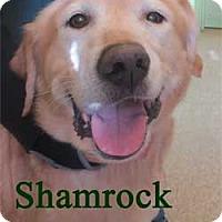 Adopt A Pet :: Shamrock - Warren, PA