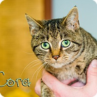 Adopt A Pet :: Cora - Somerset, PA