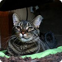 Adopt A Pet :: Gabby - Manitowoc, WI