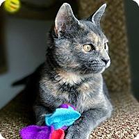 Adopt A Pet :: Janie - Hanna City, IL