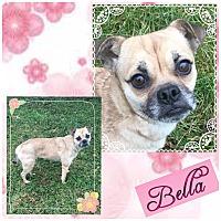 Adopt A Pet :: Bella - Fort Wayne, IN