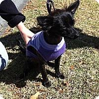 Adopt A Pet :: Marti - Santa Monica, CA