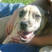 Adopt A Pet :: Eden - white settlment, TX