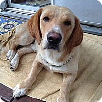 Adopt A Pet :: Walter - Upper Saddle River, NJ