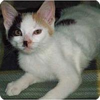 Adopt A Pet :: Deana - Secaucus, NJ