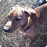 Adopt A Pet :: Ryder - Albany, NY