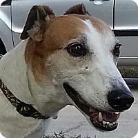 Adopt A Pet :: Ace - Brandon, FL