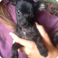 Adopt A Pet :: JACKIE JACKSON - Scottsdale, AZ
