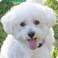 Adopt A Pet :: Parker - La Costa, CA