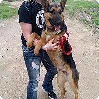 Adopt A Pet :: Hunter - Bowie, TX