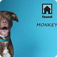 Adopt A Pet :: Monkey - Chicago, IL