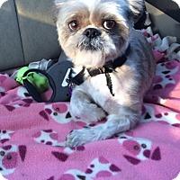 Adopt A Pet :: Gizmo - Boston, MA