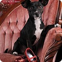 Adopt A Pet :: Kiara - Henderson, NV