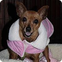 Adopt A Pet :: Sandy - Howell, MI