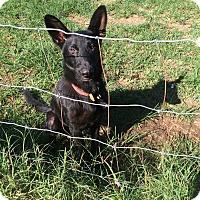 Adopt A Pet :: Riley - Hohenwald, TN