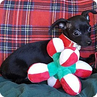 Adopt A Pet :: Baby Boy Ethan - Baileyton, AL