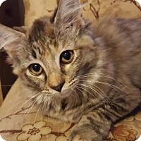Adopt A Pet :: Twiggy D - Orlando, FL