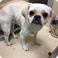 Adopt A Pet :: Prancy - Newport, KY