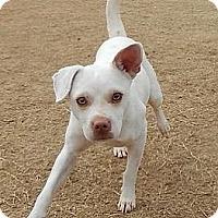 Adopt A Pet :: Mowgli - Athens, GA