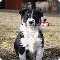 Adopt A Pet :: G-puppies (M) - Salt Lake City, UT