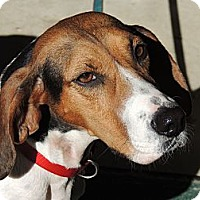 Adopt A Pet :: Sally URGENT $200 - Brattleboro, VT