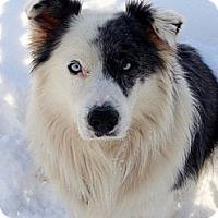 Adopt A Pet :: Nero - Westport, CT