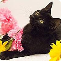 Adopt A Pet :: Bits - Sacramento, CA