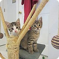 Adopt A Pet :: Cody & Carla - Arlington, VA