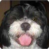 Adopt A Pet :: Leo-VA - Suffolk, VA