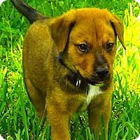 Adopt A Pet :: Rocky - Miami, FL