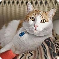 Adopt A Pet :: Wayne - Grand Rapids, MI