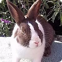 Adopt A Pet :: Marcie - Santee, CA
