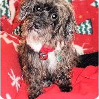 Adopt A Pet :: Phoebe - Mooy, AL