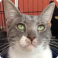 Adopt A Pet :: Phil - Winchester, CA
