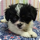 Adopt A Pet :: Caleb